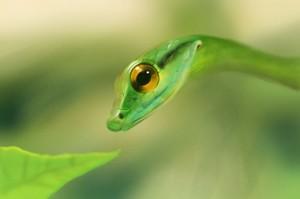 Esmeralda the Snake
